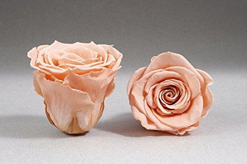 12 lachsfarbene Rosen je 3,5 cm Durchmesser