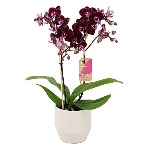 Gedicht orchideenhochzeit 17 hochzeitstag 17. Hochzeitstag: