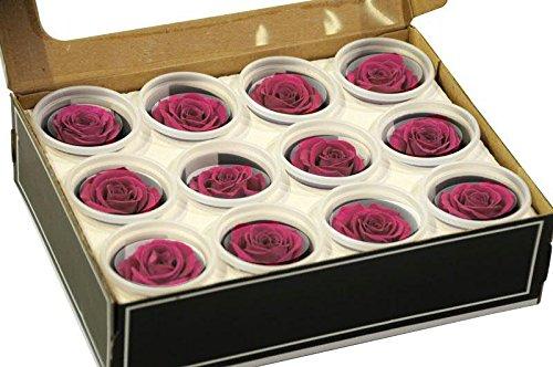 12 pinkfarbene Rosen je 4 cm Durchmesser