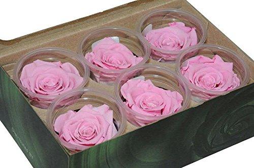 6 rosafarbene Rosen je 7 cm Durchmesser