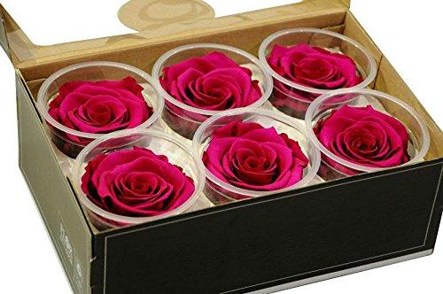 6 pinkfarbene Rosen je 7 cm Durchmesser