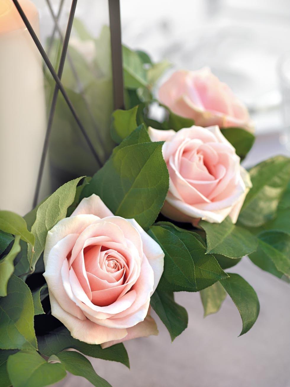 Tischdekoration rosa Rosen mit Salal-Blättern