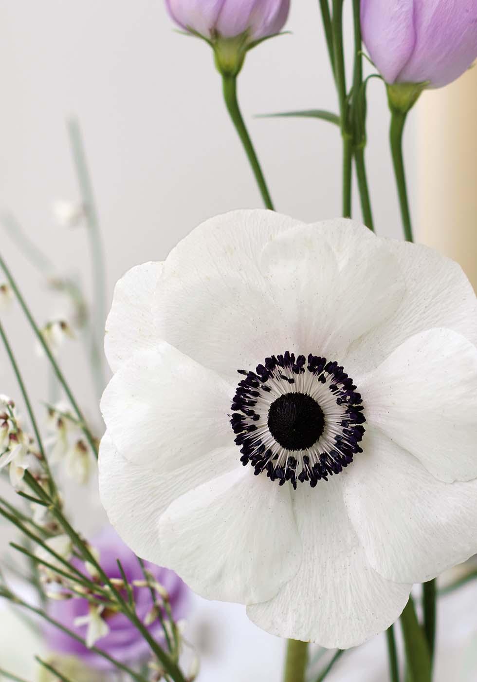 Hochzeitsblumen Anemone