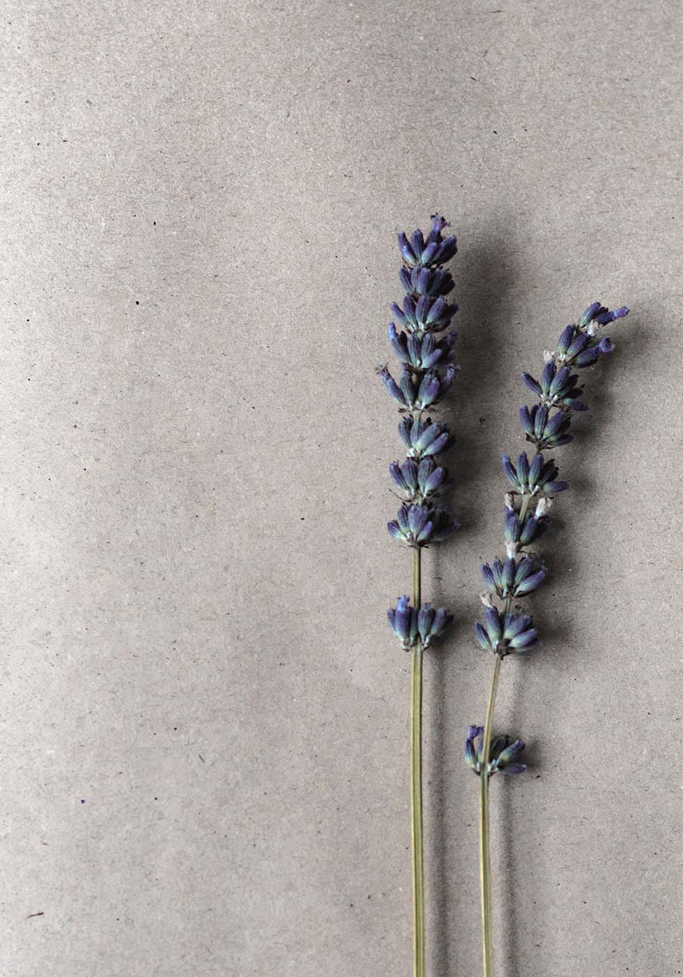 Hochzeitsblumen Lavendel