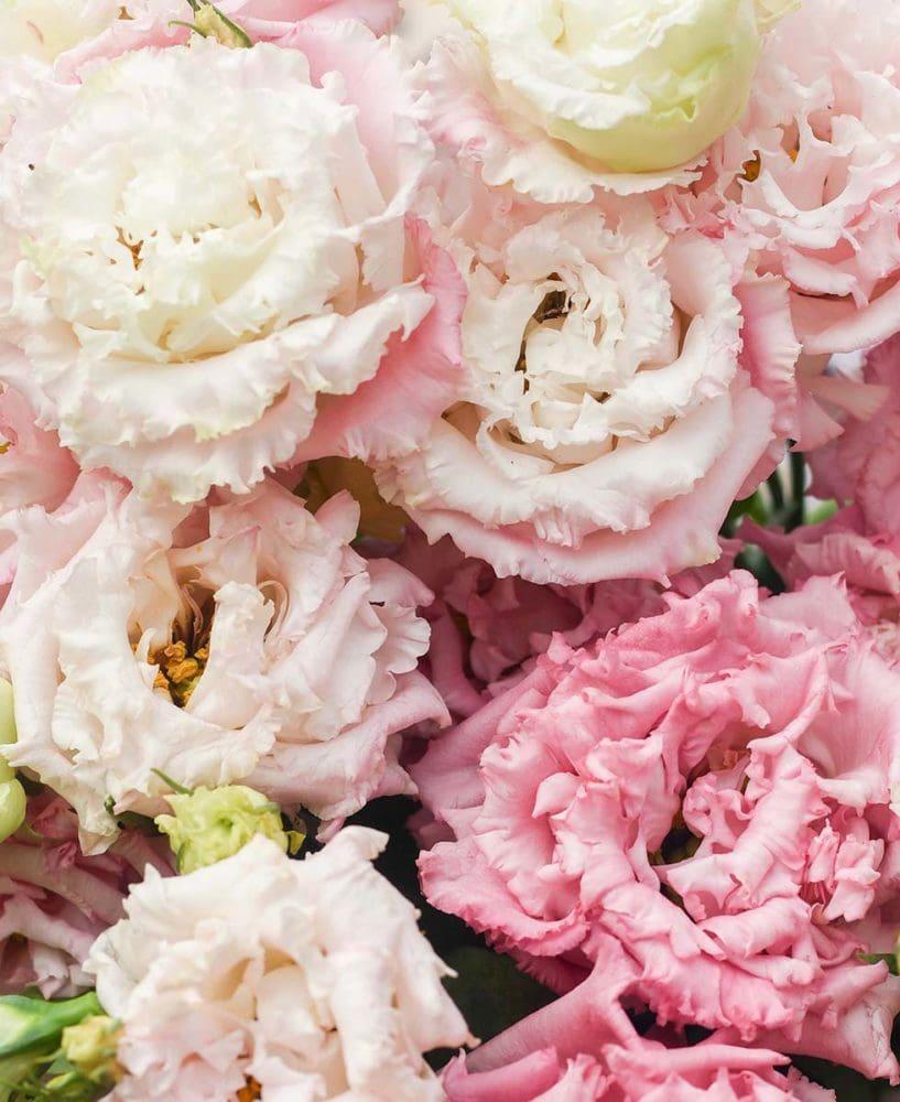 Hochzeitsblumen Lisianthus
