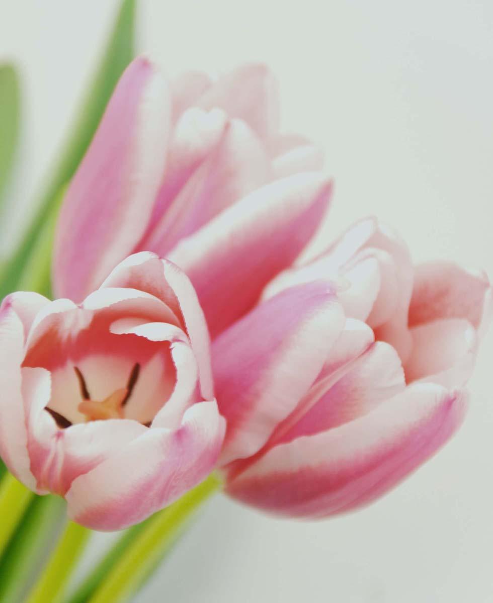 Hochzeitsblumen Tulpen